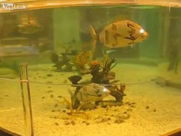 Peces robots: pequeños peces nadan como si fueran de verdad