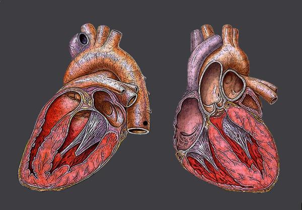 En el futuro, Spray Medico podrá corregir la insuficiencia cardiaca