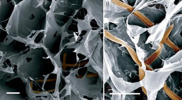 Científicos crean tejido hibrido de células humanas y electrónicas