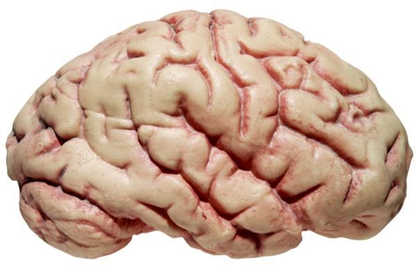 Investigadores crean recuerdos a corto plazo en laboratorio