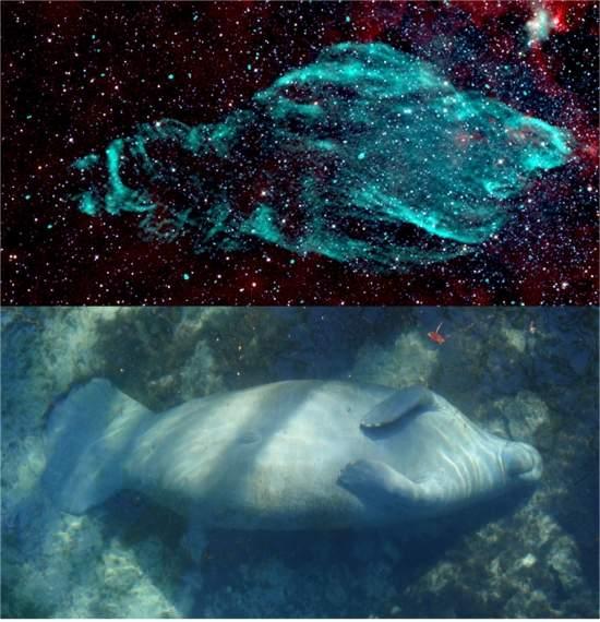 La nebulosa del manatí – una nebulosa con la forma de un mamífero acuático