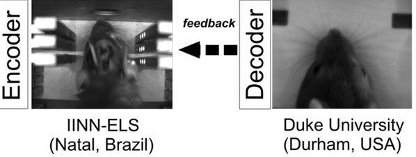 Cientifícos conectan el cerebro a dos ratas