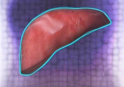 Hígado artificial es creado por los científicos usando una impresora 3D